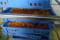 蛋黄烘干存放高温烘干机CGF20/SN项目